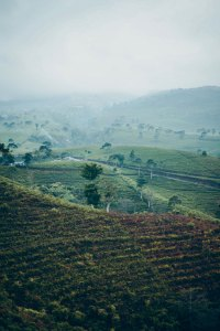 Borneo plantation photo