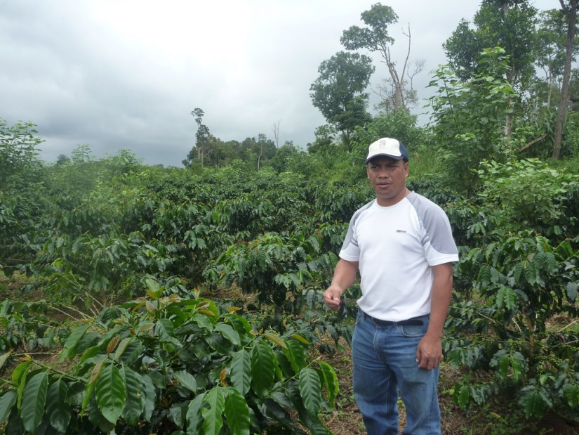 Coffee plantation in Laos. Photo: MTC Group