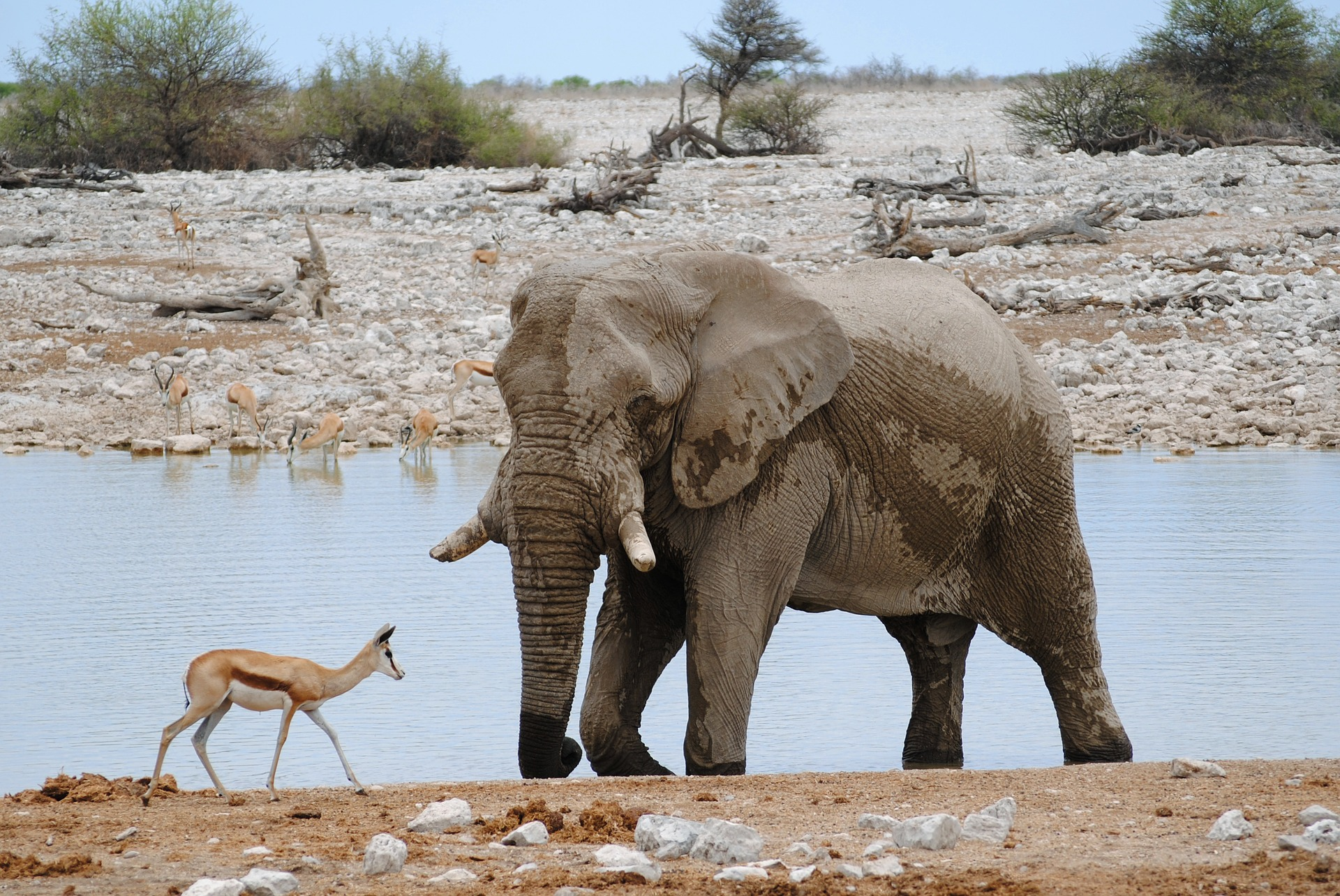 At the watering hole in Namibia's Etosha National Park.