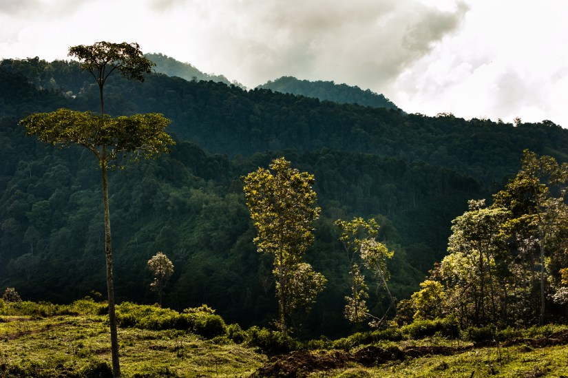The Leuser Ecosystem. Photo: Jessica Barrett