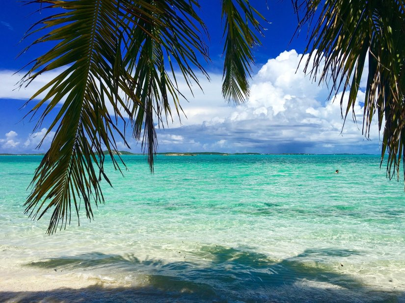 bahamas-view under a palm