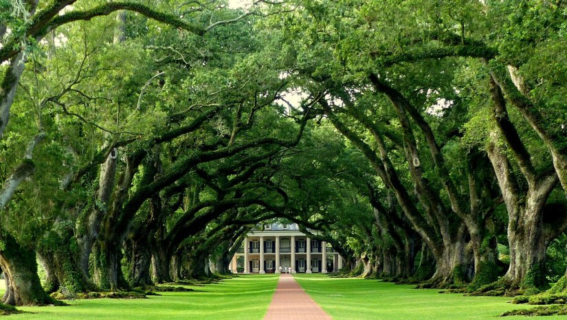 Oak walkway to Oak Alley Plantation