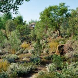 Globe Plants – Bundle 19 – Temperate Plants (premium)