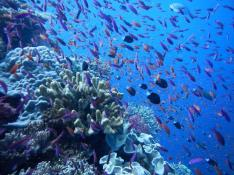 Cousteau, Jean-Michel. Pictures of Jean-Michel Cousteau Fiji Islands Resort - Resort (All-Inclusive) Photos. Digital image. Fiji Islands Resort, Savusavu. Trip Advisor, 7 Feb. 2013. Web. 02 Mar. 2013.