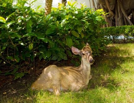 5.deer