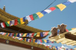 N'éléphants around the world