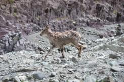 2014-08-04 11-42-15 Ladakh Stok Kangri 6000m