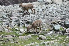 2014-08-04 11-42-26 Ladakh Stok Kangri 6000m