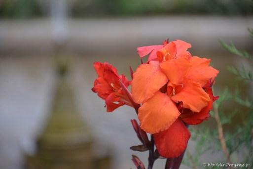 Série fleurs au jardin de Chalimar