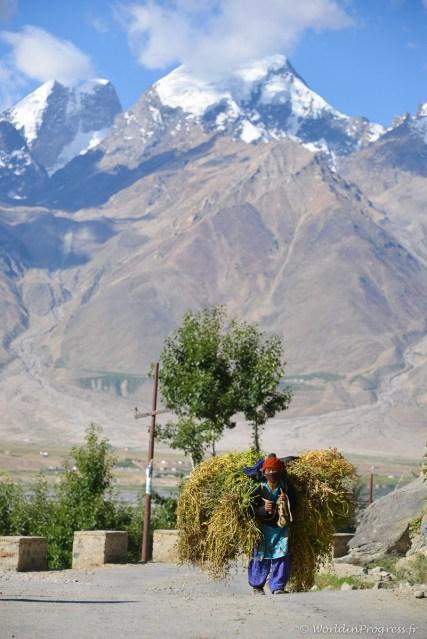 2014-08-10 08-38-43 Ladakh Zanskar Karsha