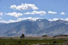 2014-08-10 09-40-58 Ladakh Zanskar Karsha