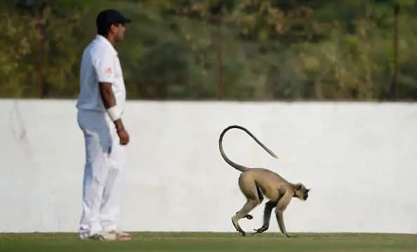 Five Bizarre Incidents That Stopped Cricket Matches