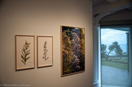 Gallery Park-7