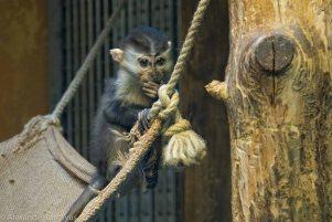 Karlsruhe Zoo, Monkey