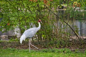 Karlsruhe Zoo, Crane
