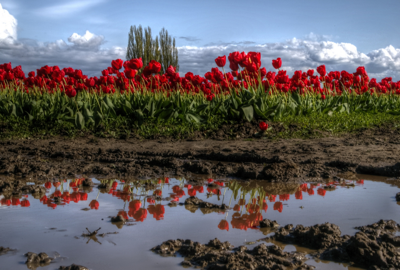 115A0459_60_61_64_65_tonemapped
