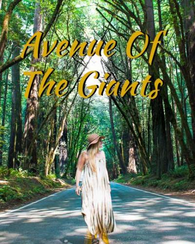 Avenue-of-the-Giants-Icon