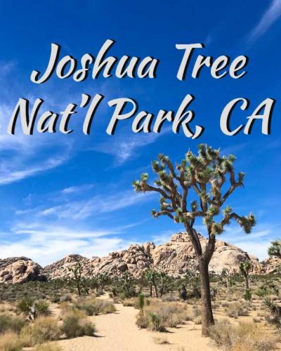 Joshua-Tree-Natl-Park-Icon_2