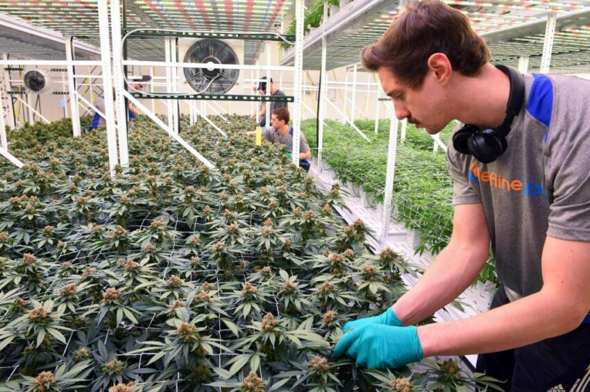 Minnesota court: Workers' comp can't cover medical marijuana