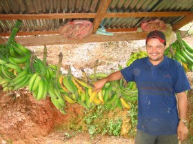 This plantain harvest will help feed the family.