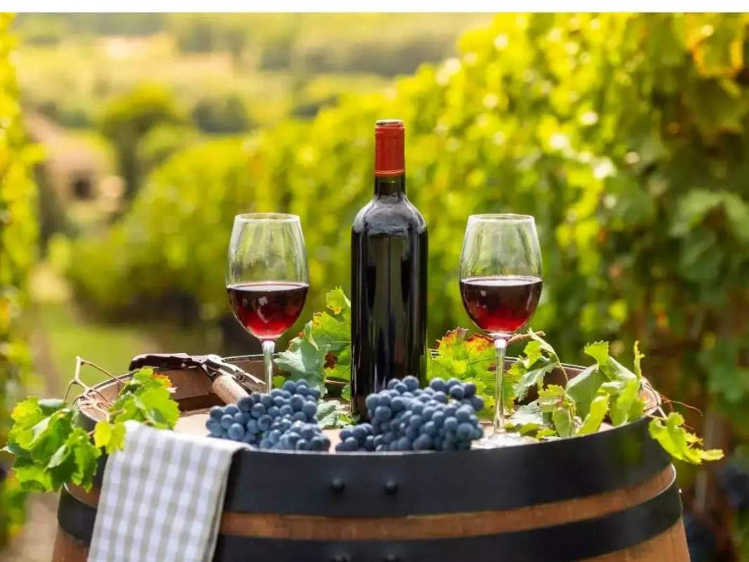 Wine benefits: Ayurveda told wine as medicine, red wine can give longevity;  If you drink like this, you will get many benefits