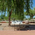 Grab A Picnic Basket | Family Fun At Desert Mountain Park