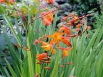 Flowers, West Carie