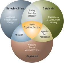 Venn Diagram of neurotransmitter interaction