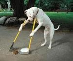 cleanupp