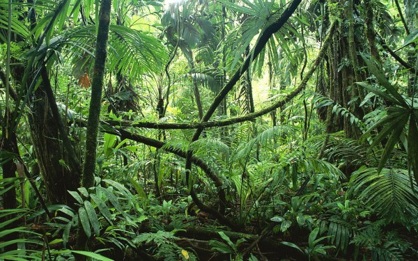 jungle-forest -World of DTC Marketing.com