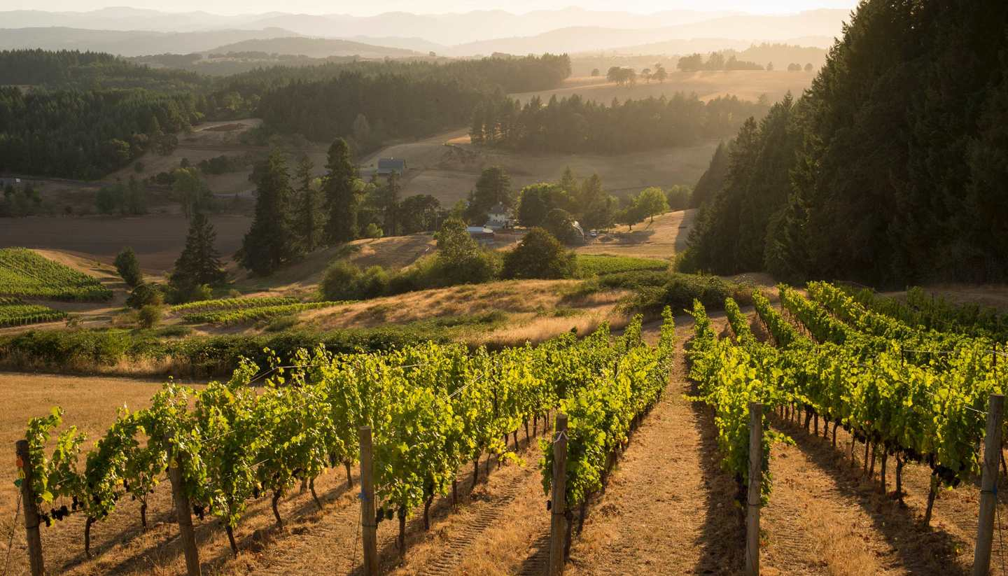 From Orgasm Addict to Oregon Pinot Noir - A World of Food and Drink