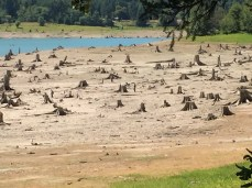 Evidently it hasn't been this dry in living memory. Look closely in the middle of the picture and yes those are humans standing by the trees.