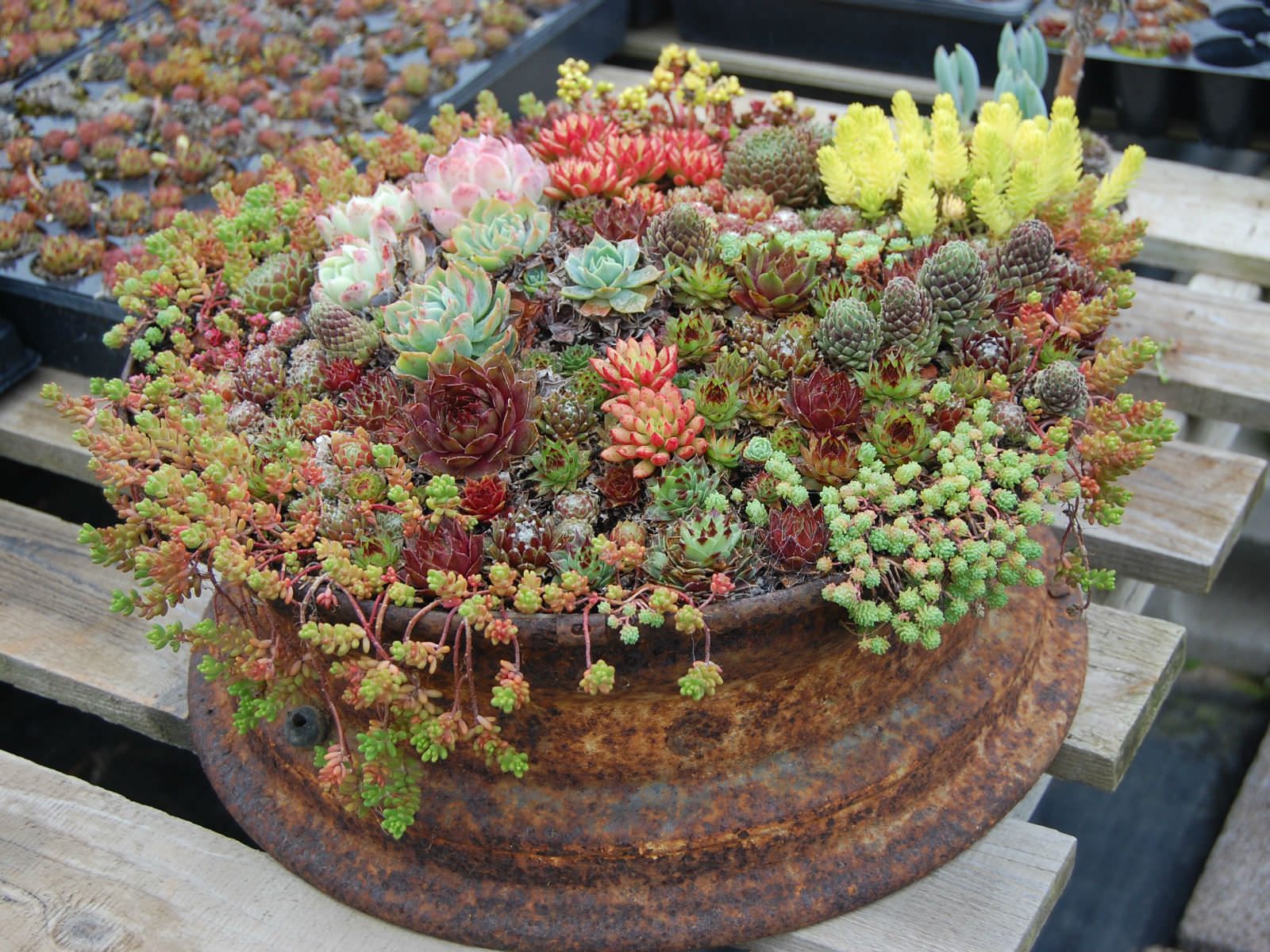 Indoor Plants Canberra