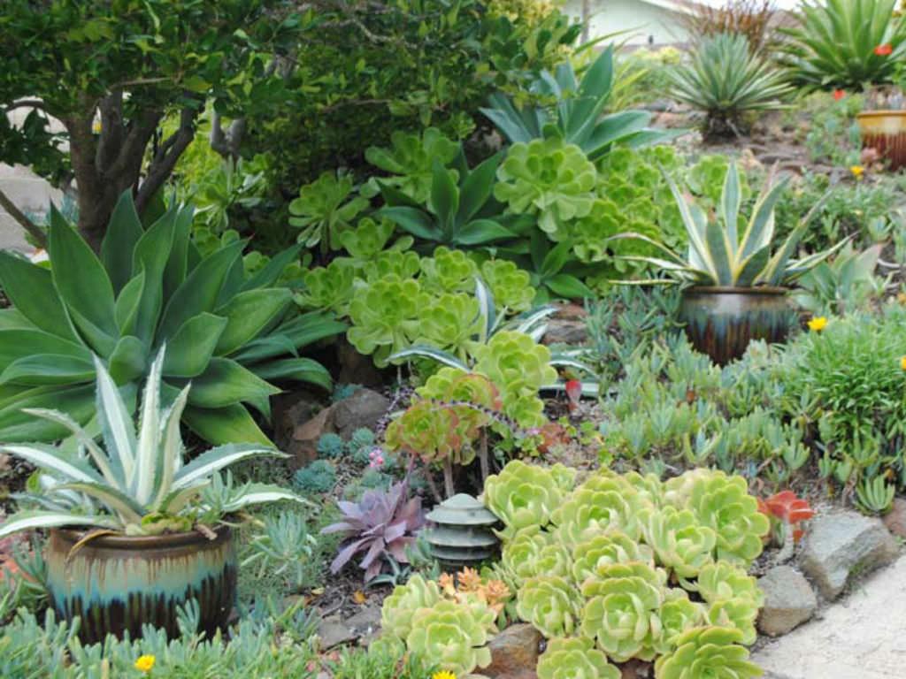 Unique Planters Succulents