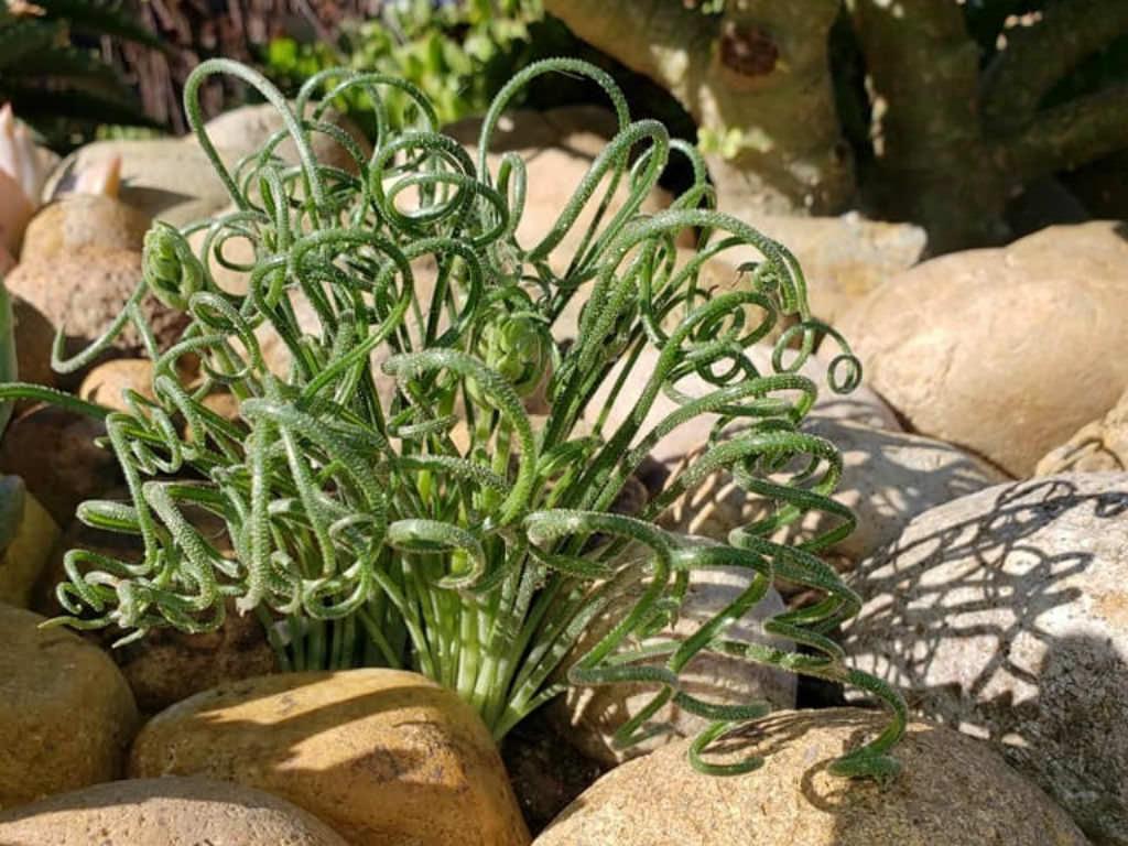 Where Plant Succulents
