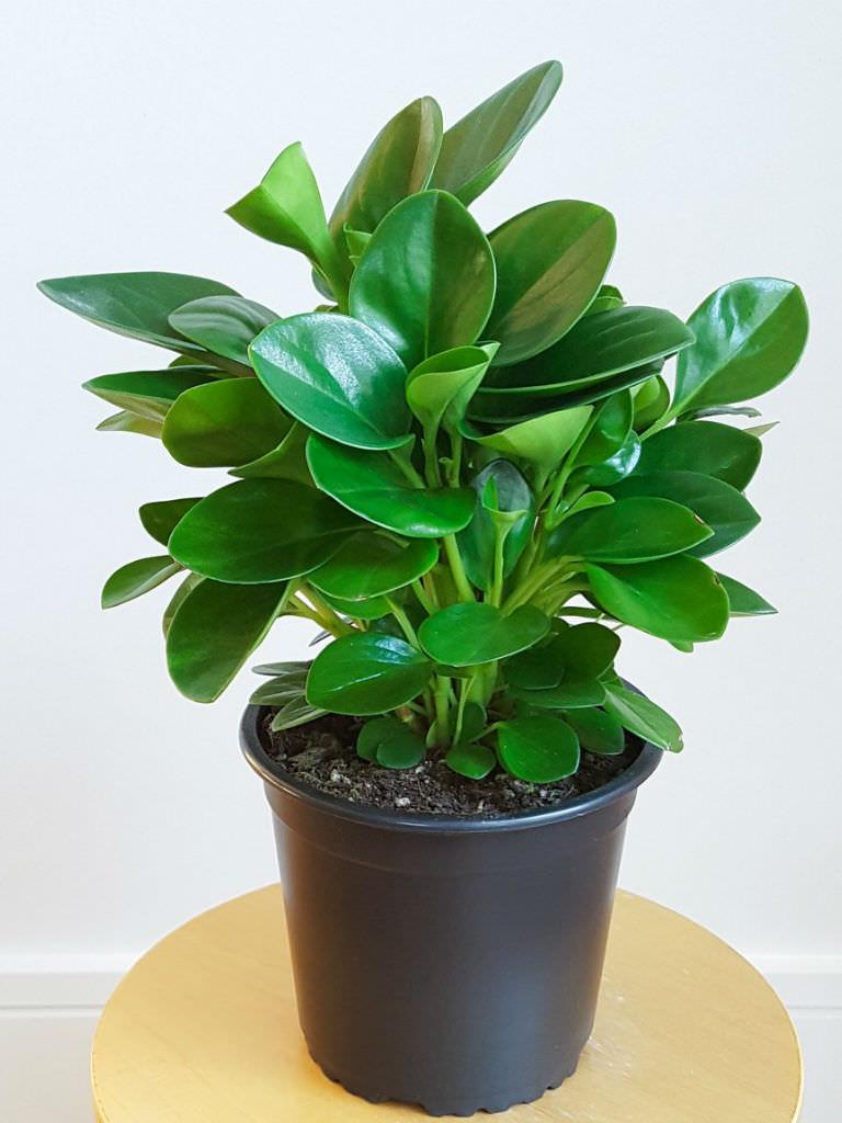 Succulent Plants Species