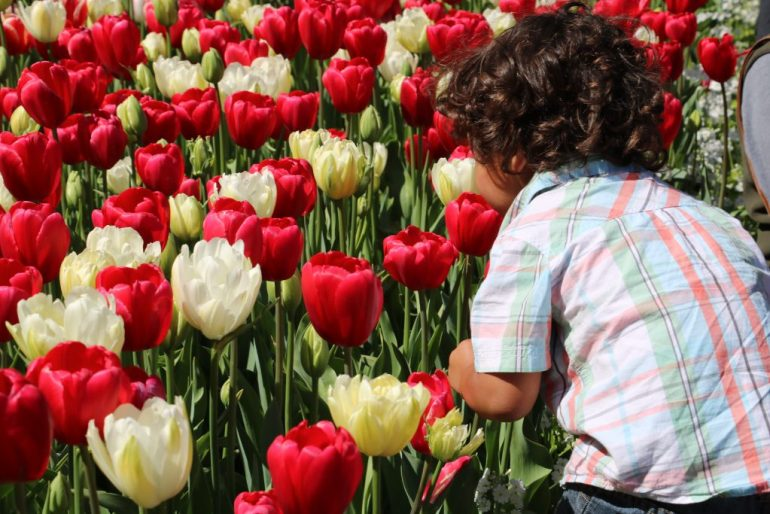 Incredible Family Travel Experiences - Best of 2016 Tulip Festival Perth