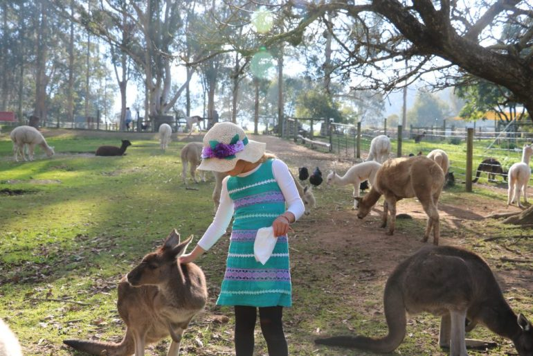 Incredible Family Travel Experiences - Best of 2016 alpaca Farm, denmark, australia