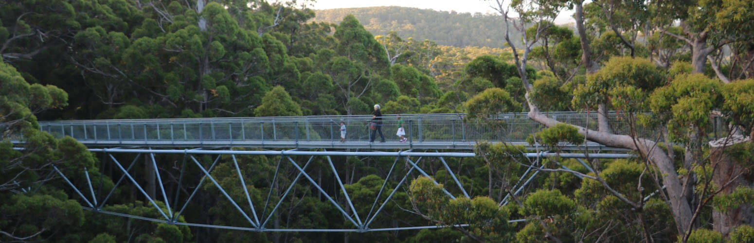 best places to stay near Tree Top walk