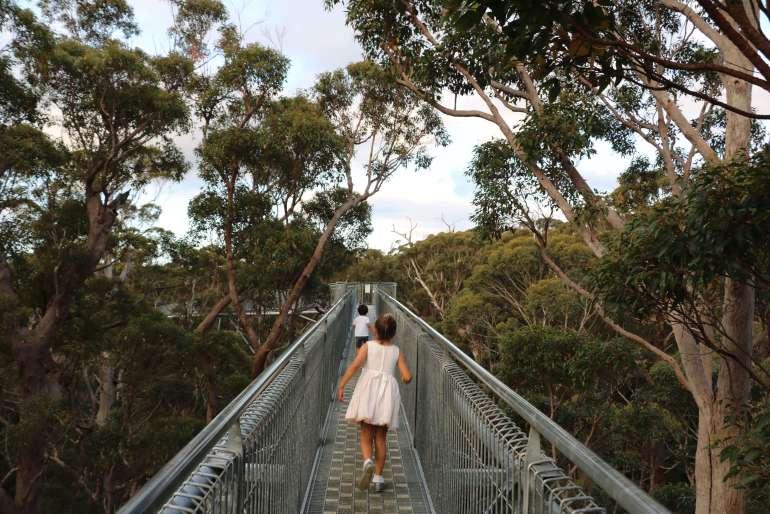 Best Tree Top Adventures Around The World
