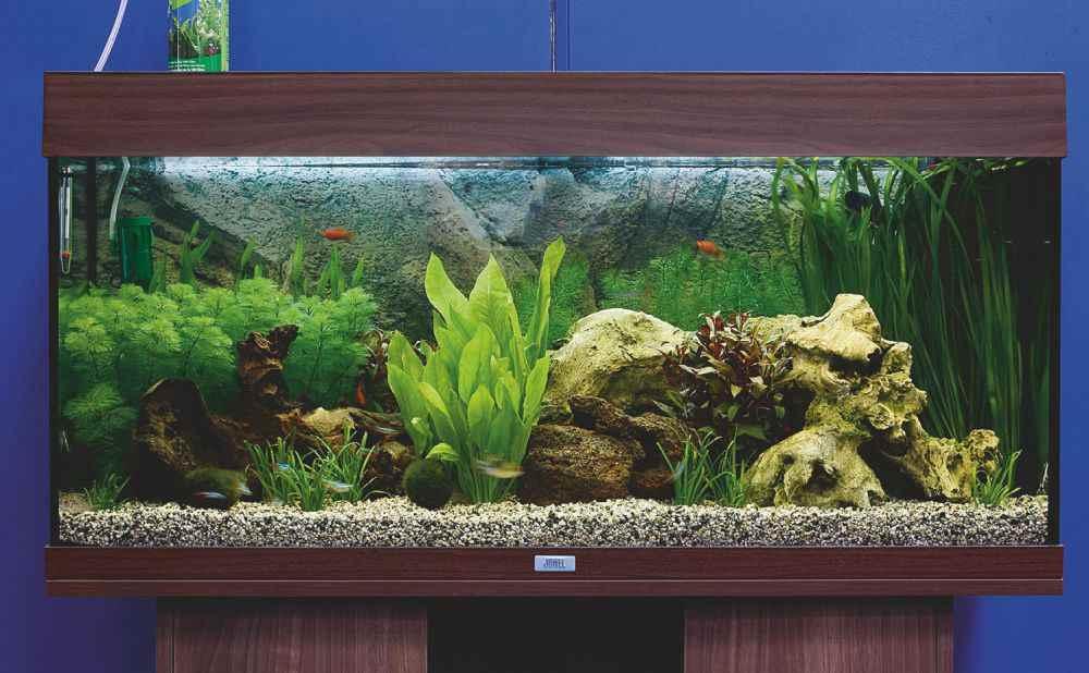 Freshwater Aquarium Set Up