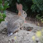 Bunny on alert12