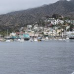 Catalina Island Harbor12