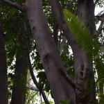 Amongst trees12