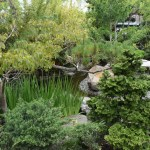 Japanese garden12