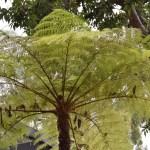 Palm umbrella12