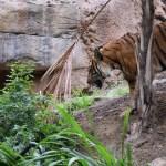 Tiger112