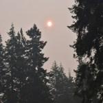 Morning sun thru wildfire smoke12