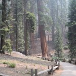 On the trail to General Sherman12