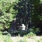 Rock tower near a sequoia tree12